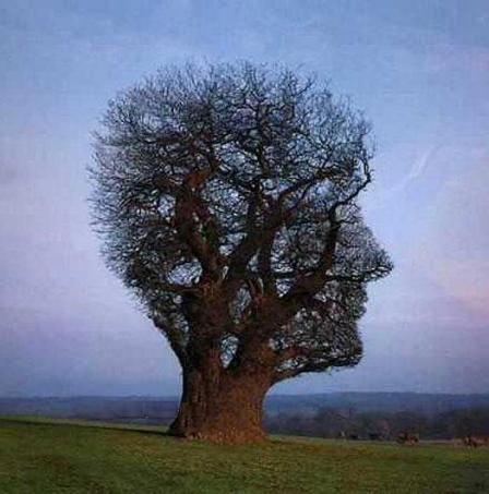 tree_illusion.jpg